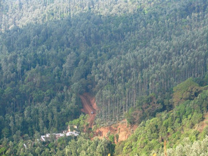 The state government informed the panel that enforcement of the Forest and Wildlife Acts along with Environment Protection Act and associated prohibitions, restrictions and regulations had slowed down development activities in the region. DH File Photo
