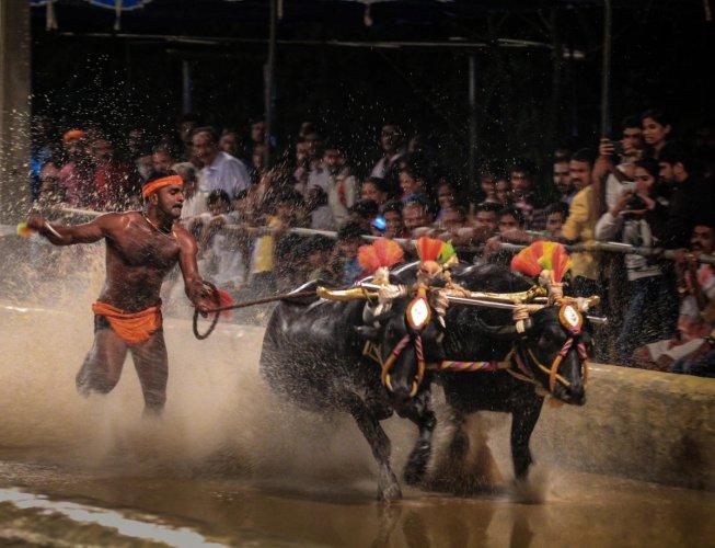 A view of a Kambala race.