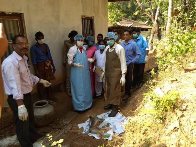 Health officials collecting the viscera of the dead monkey in Kandlur Marase Kandlur gram panchayat limits in Kundapur taluk on Saturday.