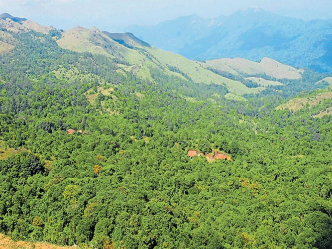 The Karnataka government is all set to reject the recommendations of the K Kasturirangan committee report on conservation of the Western Ghats. PTI file photo