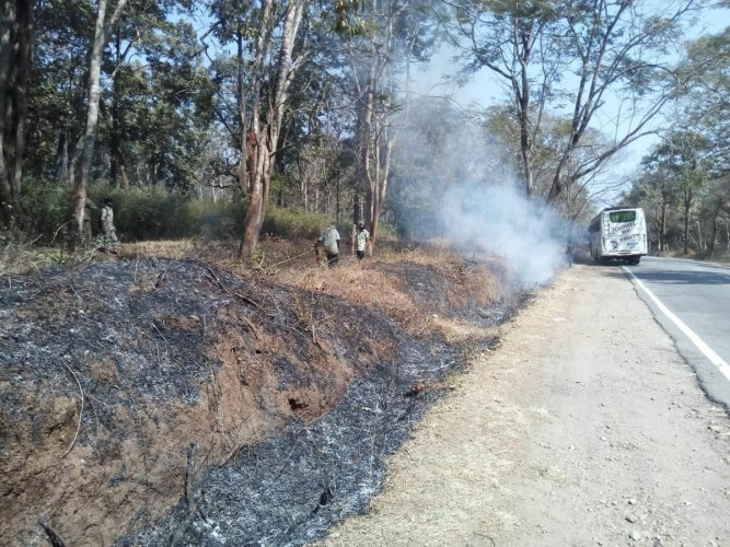 The forest officials clear the weeds beside the road, at Anechowkooru near Gonikoppa.