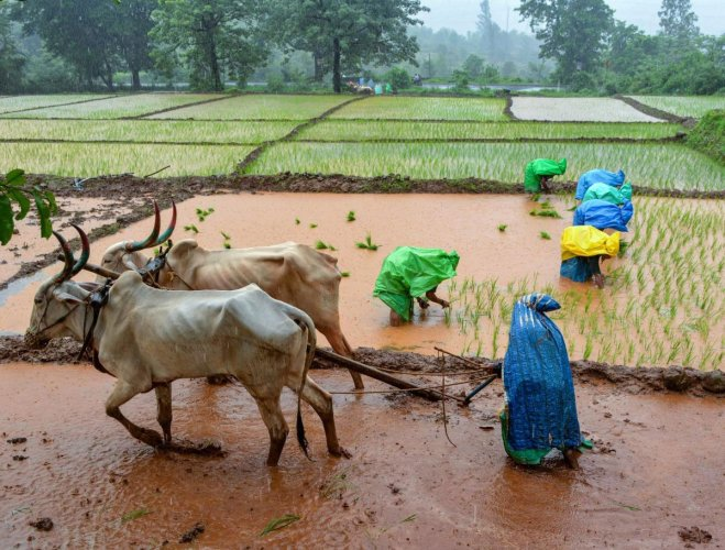 The agricultural credit flow has increased consistently over the years, exceeding the target set for each fiscal. For instance, credit worth Rs 11.68 lakh crore was given to farmers in 2017-18, much higher than the Rs 10 lakh crore target set for that year, they added. (PTI File Photo)