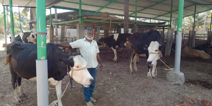 Dairy farmer Keshavamurthy, from Hanumanahalli in Kadur, with his cattle.