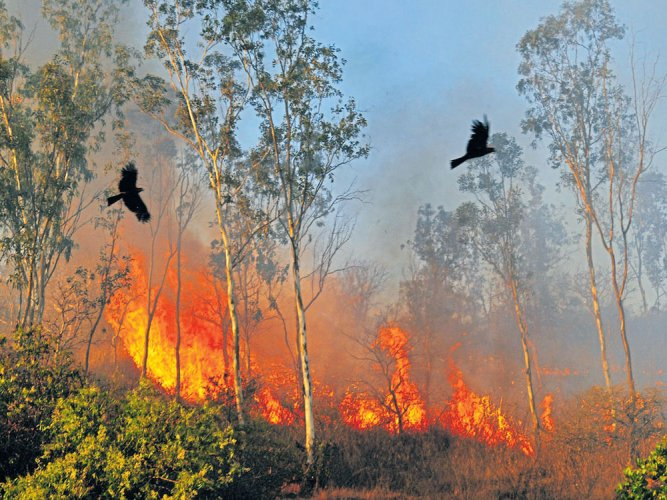 Karnataka tops the list with 77 forest fires. Maharashtra follows with 34 cases. Then in line are Arunachal Pradesh (27), Nagaland (24) and Andhra Pradesh (14). (DH File Photo)