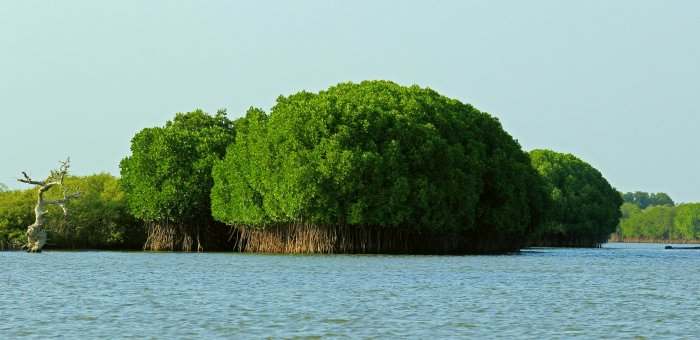 India's Mangroves