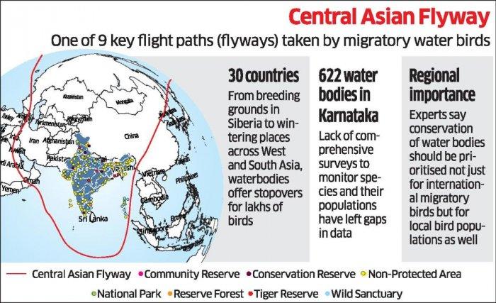 Bird Migratory new