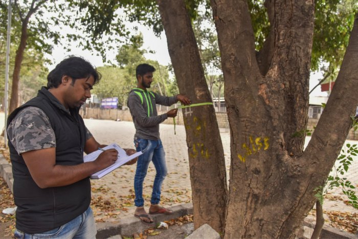 (From left) Vijay Nishanth, plant doctor and activist, and Shiva, a volunteer, count trees which have been marked newly to be axed on Ballari road. DH Photo/ S K Dinesh