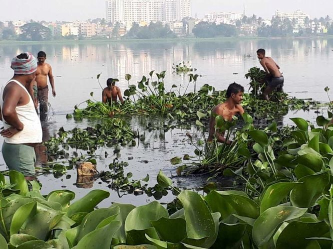 The committee formed by the National Green Tribunal (NGT) to oversee the works at Bellandur and Varthur lakes will visit the waterbodies on February 17.