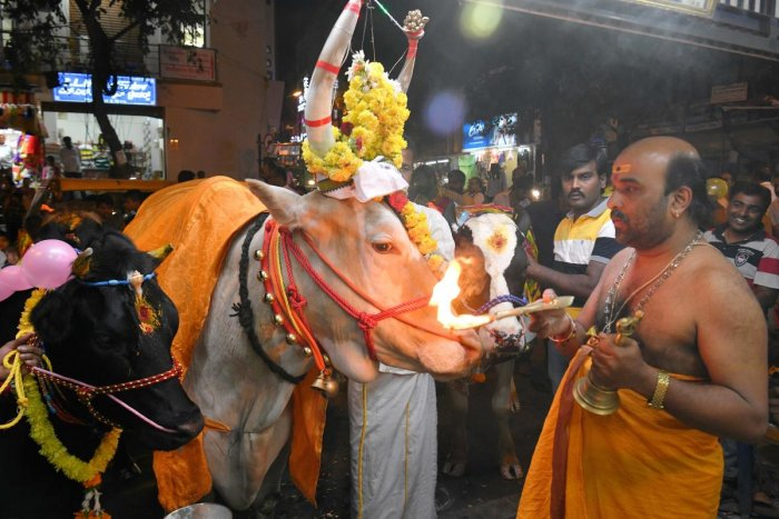 File photo: A Hindu priest performs a blessing ritual for a cow before being led over burning hay as part of a tradition to seek good fortune and protection from harm during the Hindu Makar Sankranti festival in Bangalore.