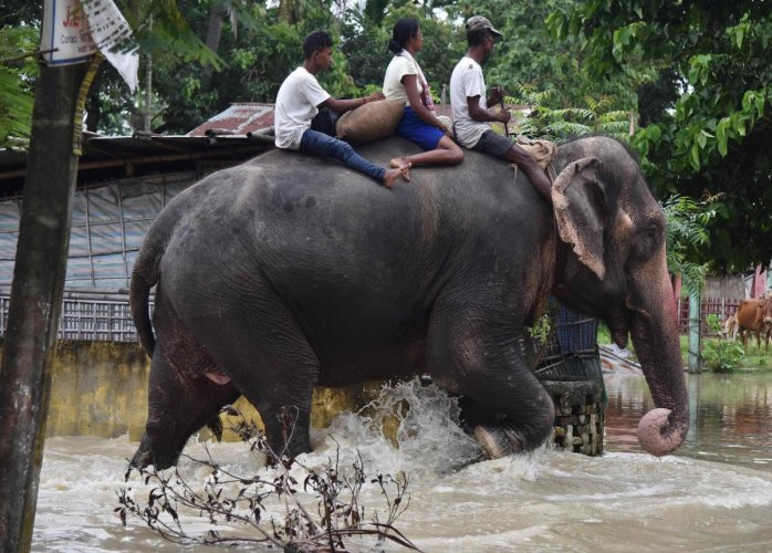 An elephant of the Assam Forest department wades through flood waters in Jakhalabandha area in Koliabor, some 186km from Guwahati, the capital city of India's northeastern state of Assam on August 13, 2017. / AFP PHOTO