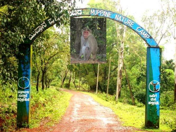 The Kasargod district in North Kerala has been put on a high alert as cases of Kyasanur Forest Disease popularly known as Monkey fever, have been reported.
