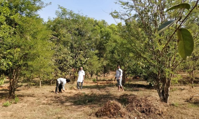 transformation Volunteers engaged in cleaning the premises of Nemmadi, a burial site in Sirsi.