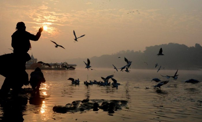 Birds flock over the River Narmada as devotees feed them, in Jabalpur. PTI