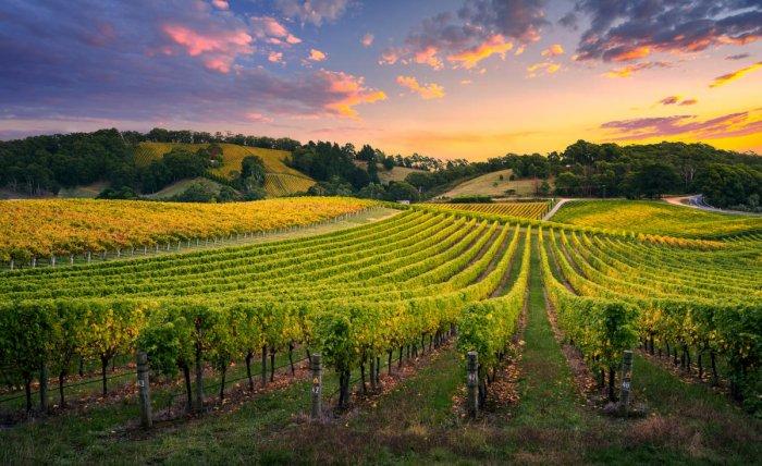 A beautiful vineyard in Adelaide Hills, South Australia