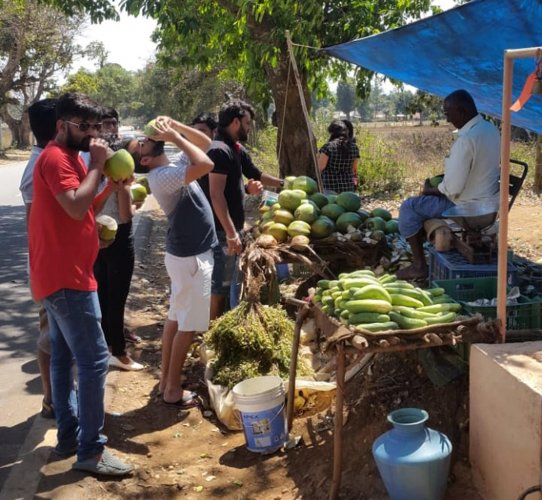 Tourists drink from tender coconuts before heading to the hilly ranges in Chikkamagaluru.