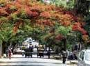 BBMP to begin tree census in City