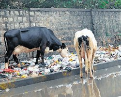 City still not garbage-free, BBMP claims otherwise
