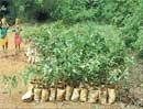 BBMP's new year initiative to increase green cover