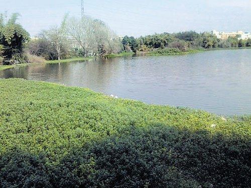 BBMP to rejuvenate Mahadevapura, Kundalahalli lakes