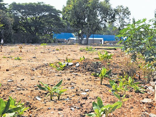 BBMP site meant for mini forest encroached upon in Domlur