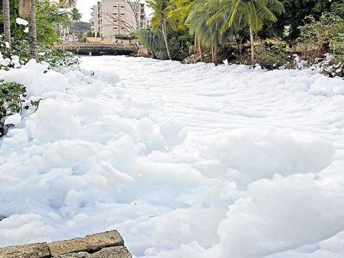 BDA, Palike face HCwrath over Bellandur Lake rejuvenation