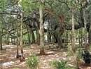 BBMP to develop tree parks