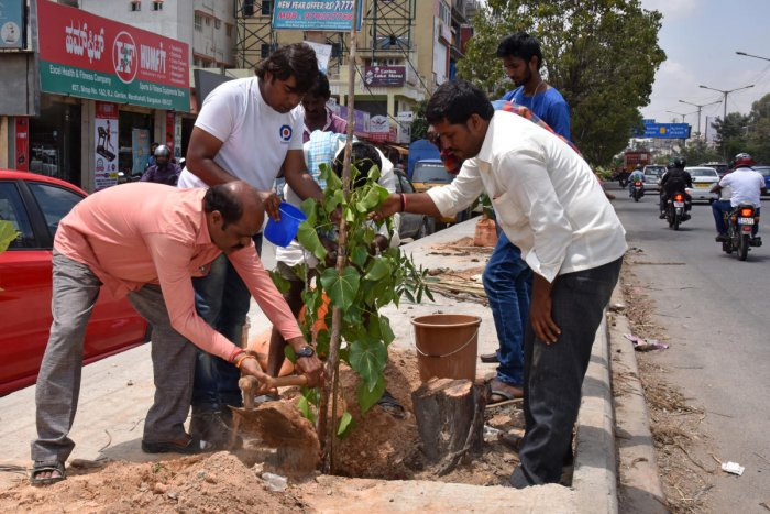 BBMP forest workers and activists plant saplings on the Outer Ring Road in Marathahalli to compensate for trees chopped down to make way for advertisement hoardings. DH FILE PHOTO