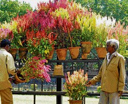 Lalbagh flower show from Jan 18