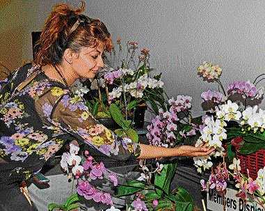 Orchid show kicks off at Lalbagh