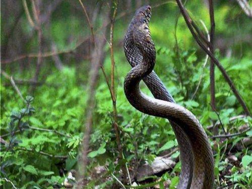 Professional rivals sent Bescom staffer snake in box: Police