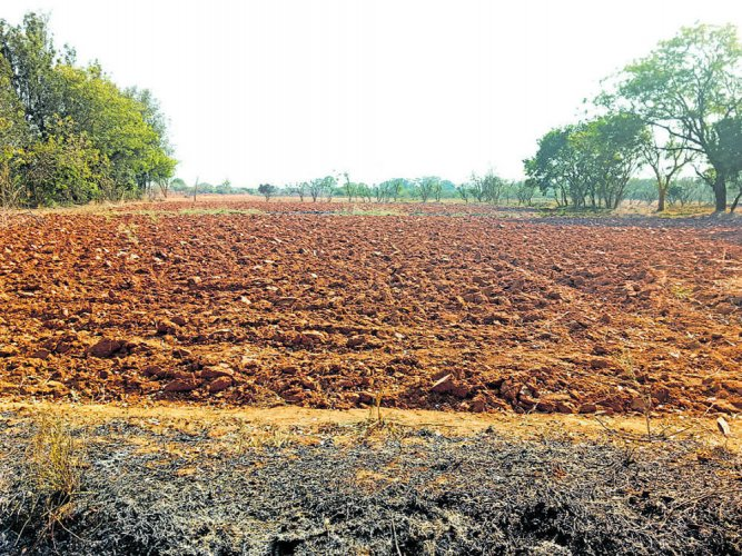 Krishi Mela called off due  to severe drought in state