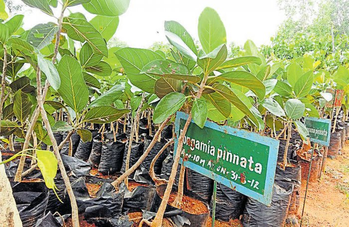 Telangana adds variety in its afforestation drive