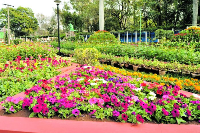 R-D flower show off to a colourful start in Mandya