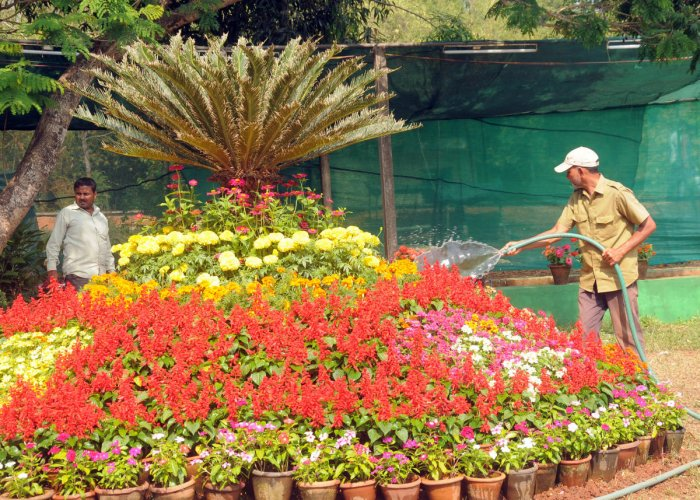 Flower show set to bloom at Kadri Park from tomorrow