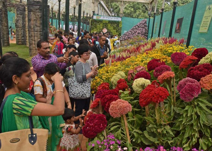 On Day 7, Lalbagh flower show gets 1,31,500 visitors