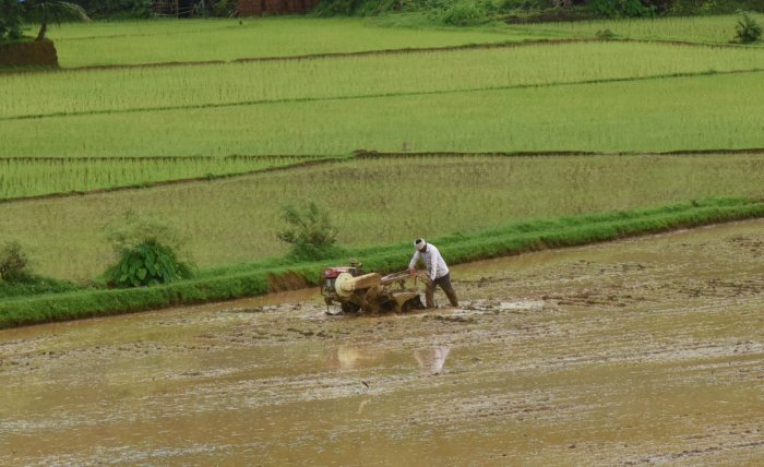 A farmer ploughs his land, to sow paddy near Udupi on Wednesday. DH Photo/Govindraj Javali