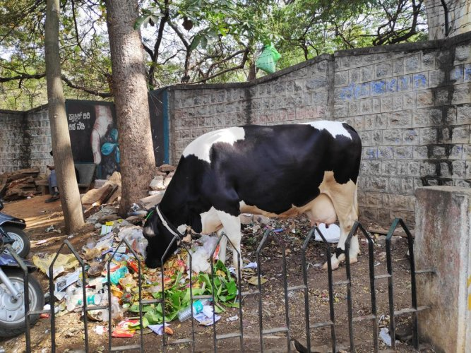We saw a cow rummaging through a pile of waste outside the garden. This was the only black spot that we could find during our visit.
