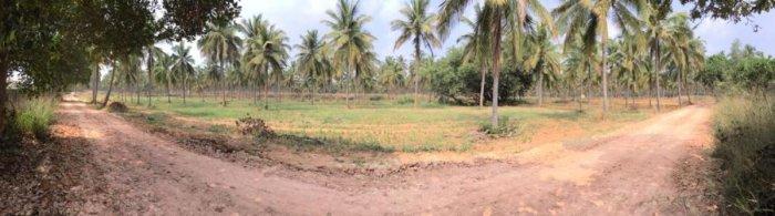 Work in progress in Kannamangala near Whitefield to create a mini Lalbagh. DH Photo/Niranjan Kaggere