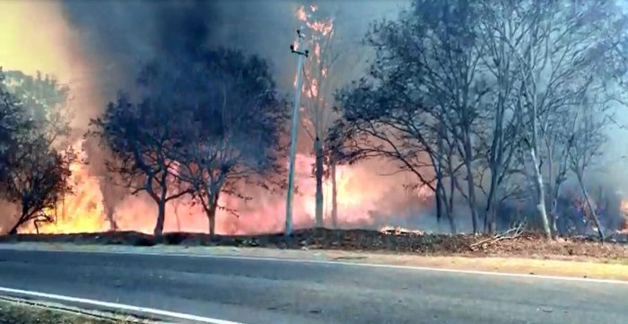 Giving real-time information on the outbreak of forest fire across the globe, the National Aeronautics and Space Administration (NASA) of the United States had also alerted about the raging fire hot spots across Bandipur. DH photo