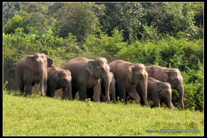 There have been instances where, Karnataka forest department staffers have driven away elephants and they were driven away from Tamil Nadu also. During such time, the pachyderms lose their path and get into conflicts. The team will also ensure the coordin