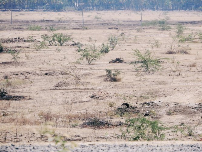 Singatagere lake in Kadur taluk is totally dried up.