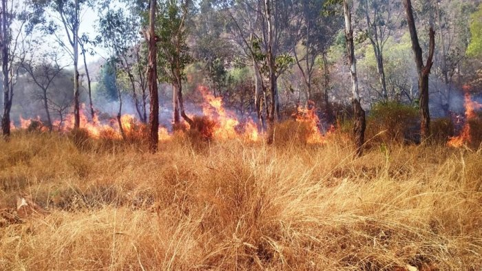 Trees and shrubs were reduced to ashes after some miscreants set fire to a mini forest at Konanuru in Nanjangud taluk in Mysuru district, on Wednesday.