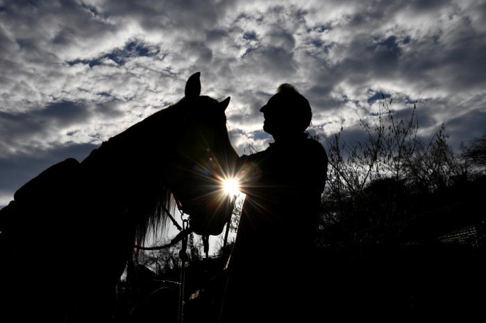 In the last six months, over 40 horses have died at the club due to ill treatment, says CUPA.