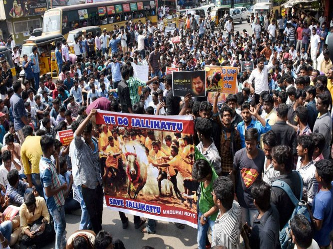 Jallikattu supporters continue protests in TN, many detained