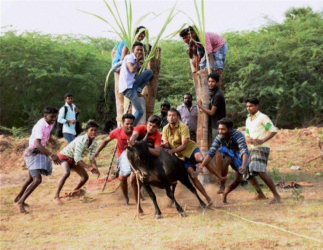 Jallikattu in SC, but we support TN: PM