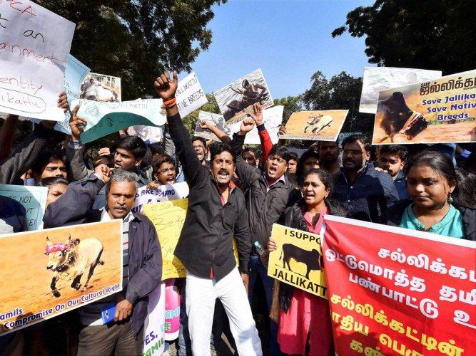 Cannot direct Centre, TN to frame spl law on jallikattu: HC