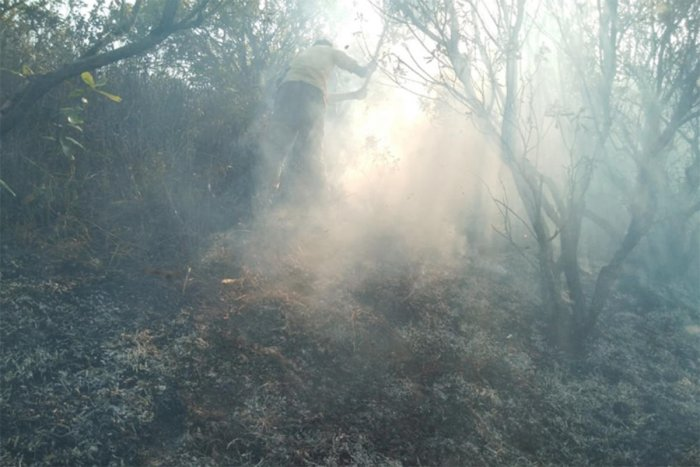 A forest guard tries to douse a fire at Tadiyandamol hill recently where a lot of greenery was gutted.