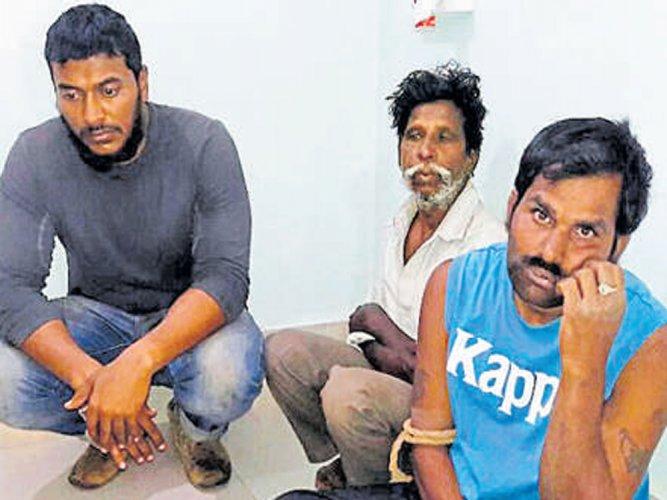 Three Bengalureans held for poaching blackbucks near KGF