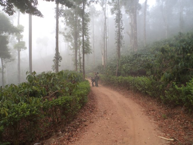 Inside the coffee estate at Jenkal