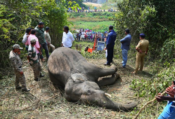 The tusker that was run over by a train near Sakleshpur on Monday morning. DH photo.